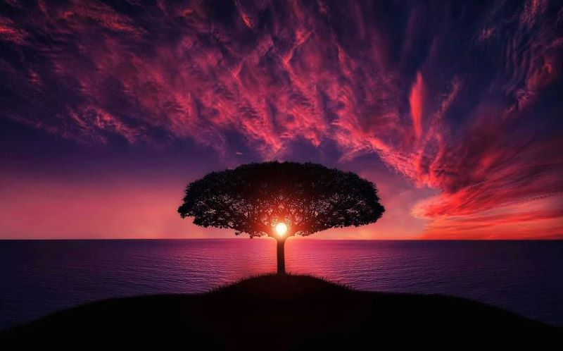 Tree at sunset - Live your life to the fullest each day